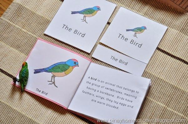 The Pinay Homeschooler: Bird Unit Activities