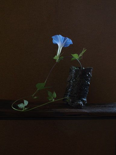 明けの色 Colors of dawn 一花一葉 by アツシ One Flower One Leaf by Atsushi