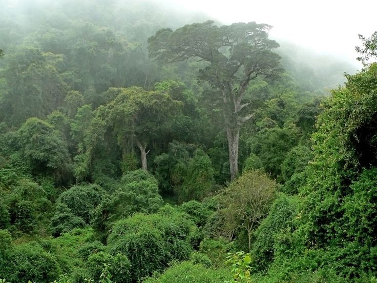 The magnificent Knysna forest