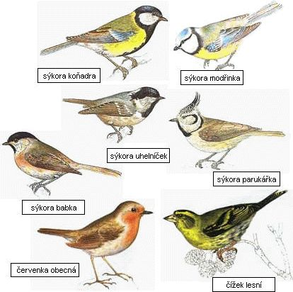 Les - plazi, ptáci