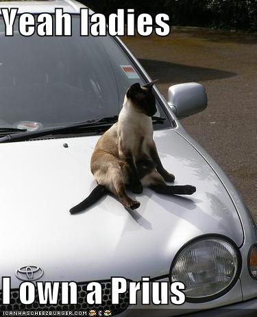 c02cd7b575e42e01075864f8417f1a8f funny cars big cats 47 best prius driving images on pinterest funny stuff, toyota,Prius Memes