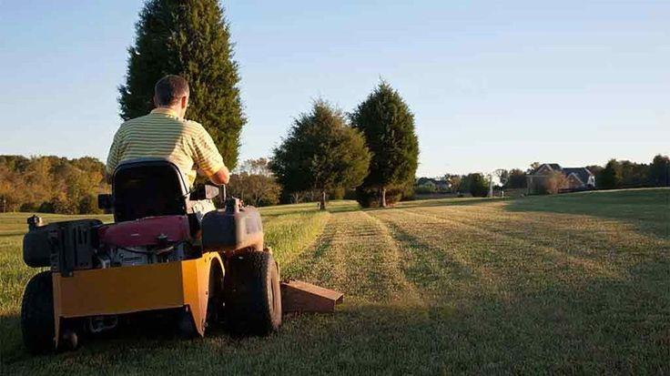 If your lawn is bigger than your house, you may need a ride-on mower. Find the best ride-on mower with our advice on what to look for.