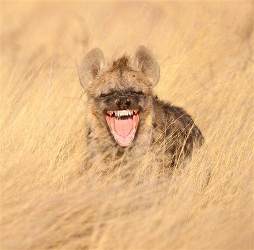 76 best laughing animals images on pinterest cutest