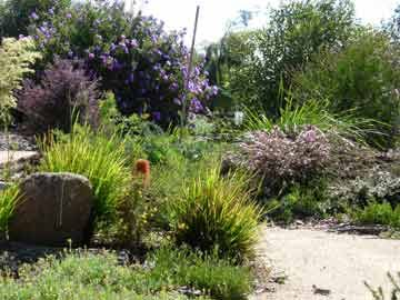 1229 best images about australian native gardens on pinterest for Australian native garden layout