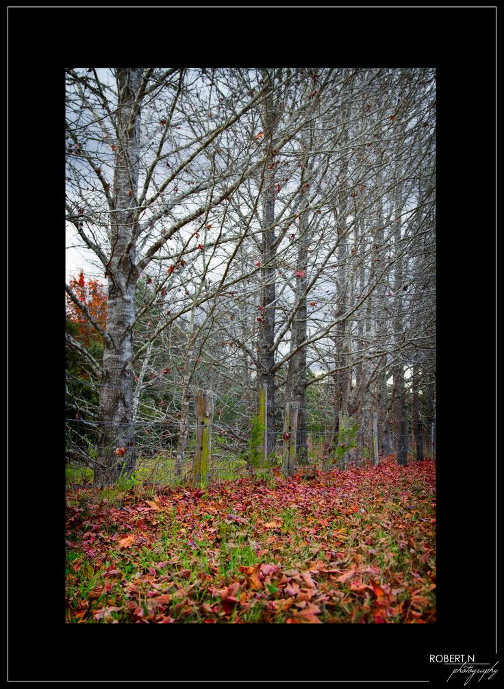 suffocating autumn #autumn #trees #leaves #grass #nature #photo #landscape #photographybyrobertn