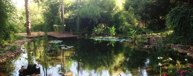 Las piscinas naturales utilizan plantas para filtrar el agua en lugar de químicos, y éstas no solamente hacen el trabajo sino que se ven preciosas.