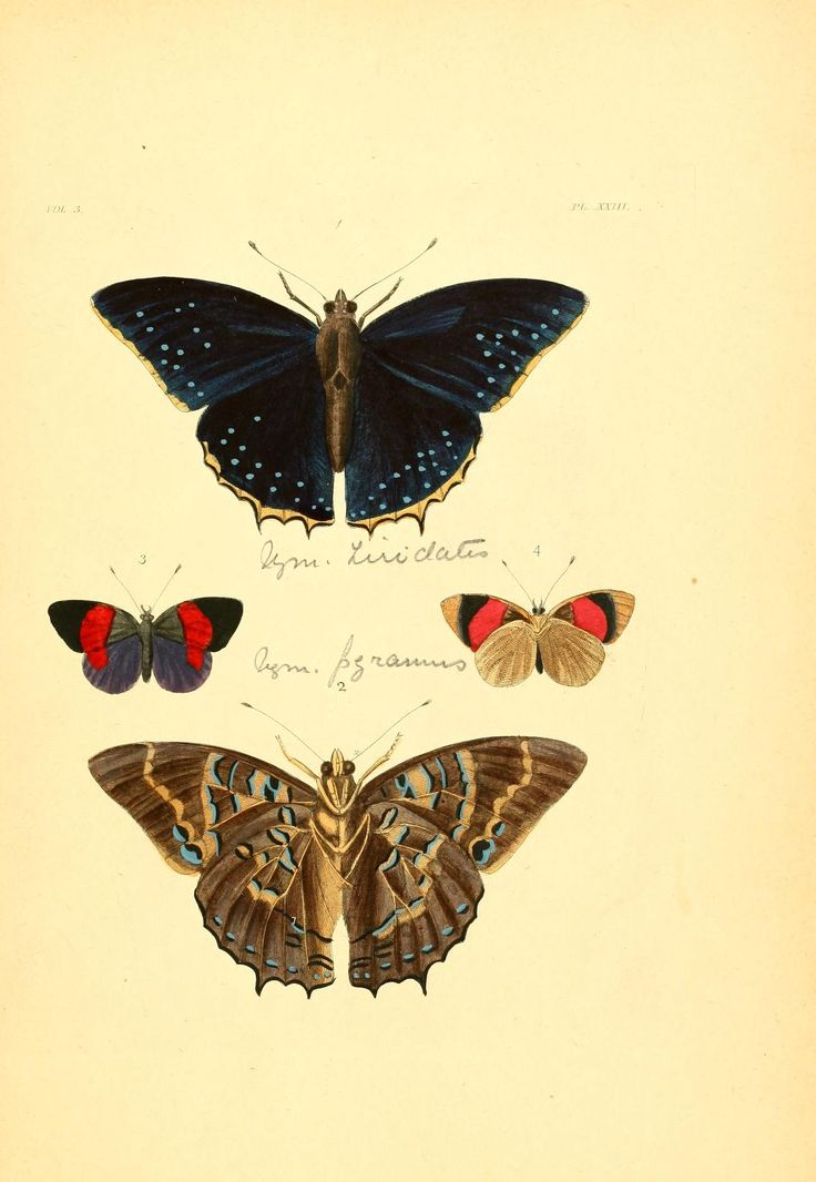 v. 1-3 (1837) plates - Illustrations of exotic entomology : - Biodiversity…