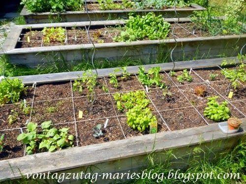 Von Tag zu Tag - Maries Blog: Gemüsegarten im Mai
