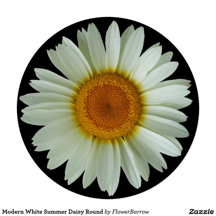 Modern White Summer Daisy Round 5.25x5.25 Square Paper Invitation Card