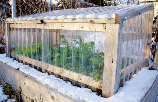 Here's how to monitor your garden cold frame on warm days to ensure you're not frying your plants:
