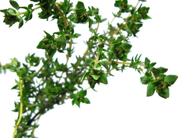 """""""Thyme is markedly antibacterial and antiviral – so whether it's just a cold or strep throat, thyme's got you covered."""""""