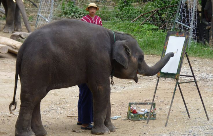 <p>A look into the cruelty behind elephant painting attractions. </p>