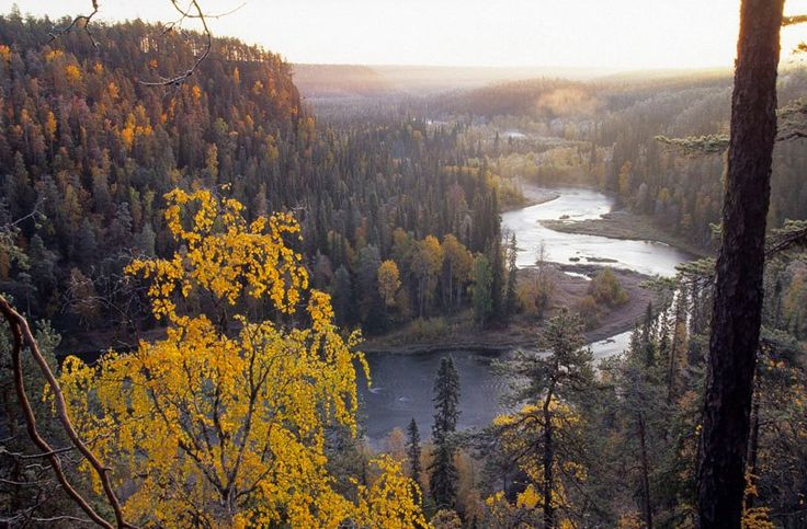 Fall in Ruka, Kuusamo. Beauty of nature all year around. To see fall colours, you should come to Kuusamo, Finland in September.