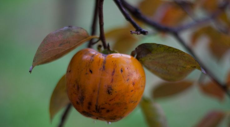 Tabella Alimenti acidi e alimenti alcalini | thegreenfood