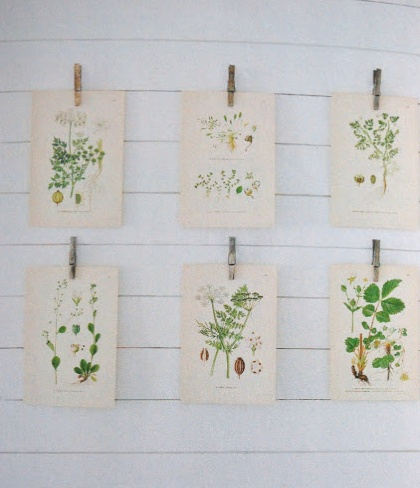botanical color plates! The lovely wonderful folks at The Goodness are designing us table numbers. :)