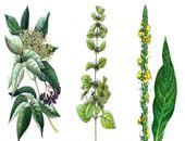 Už naše staré mamy poznali liečivé účinky mnohých rastlín a bylín. Aloe vera, žihľava, púpava, baza, lipa či materinej dúška... Zo všetkých..