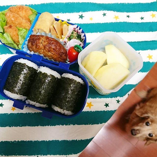 水曜日の愛情たっぷりお弁当🍱  韓ドラ観てたら。。。 あっ!私寝てません😅😅😅 アラフォー大丈夫でしょうか? 今日は息子の学校のママとランチだと言うのに。。。 目の下くま🐻子です💦💦💦 * * #おひるごはん#お弁当#ランチ#lunch#lunchbox #obento * #ハンバーグ#ささみのチーズフライ#筍土佐煮 #ほうれん草のおひたし#おネギたっぷり卵焼き#りんご🍎 * りんご🍎の香りクンクン🐶💕 食べたくて起きてきたクッキー君❤ * * #ミニチュアダックス#シニア#愛犬#dog#15歳#食いしん坊のクッキー