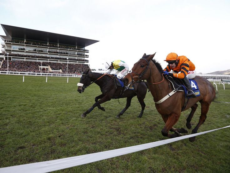 Tizzard considers ground excuse Horses, Horse racing