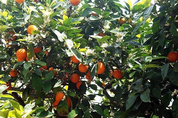 Chios island-Greece http://a4.sphotos.ak.fbcdn.net/hphotos-ak-snc6/182746_101123026633254_5660292_n.jpg