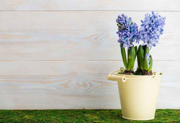 Patterned Backdrops Flower Backdrop Spring Backgrounds HJ03550