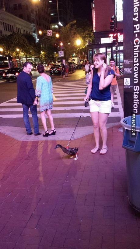 A duck on a leash wearing socks