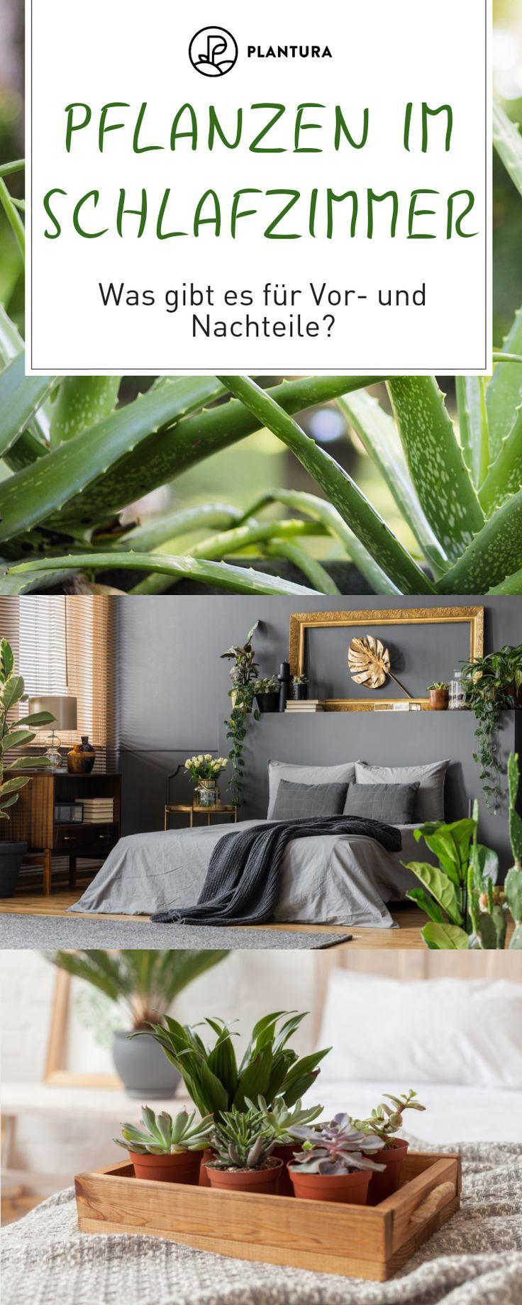 Pflanzen im Schlafzimmer Vorteile, Nachteile und