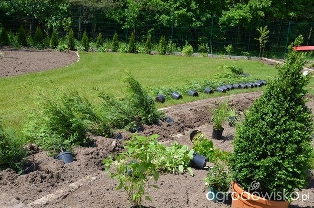 Jak zamienić glinę w wymarzony skrawek Ziemi. - strona 130 - Forum ogrodnicze - Ogrodowisko