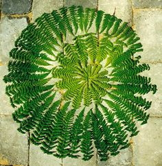 Another beautiful image to use for the meditation on Sunday 3/16 at 3:00pm your time. landart by Jorn Hassen