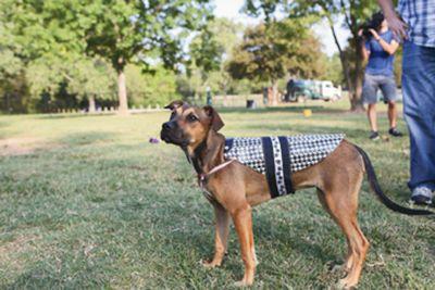 Duck Tape® Dog Raincoat