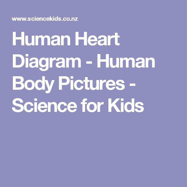 Human Heart Diagram - Human Body Pictures - Science for Kids