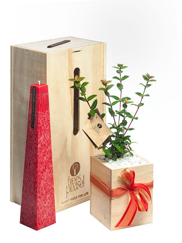 NZ made stunning candles with Tree Gift
