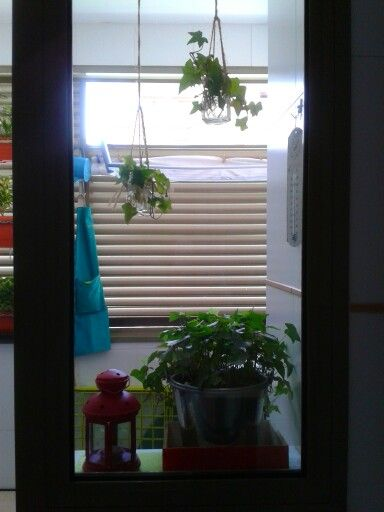 Plants in my outdoor laundry room