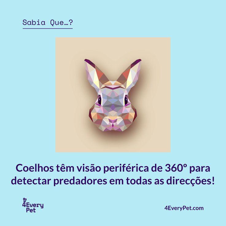 Os coelhos são pequenos mamíferos fofos, com caudas curtas, bigodes e orelhas longas distintivas. Existem mais de 30 espécies em todo o mundo, e apesar de viverem em muitos ambientes diferentes, eles têm muitas coisas em comum.  Saiba mais em https://4everypet.wordpress.com/2017/07/05/37a/  #4EveryPet #SabiaQue #Coelho