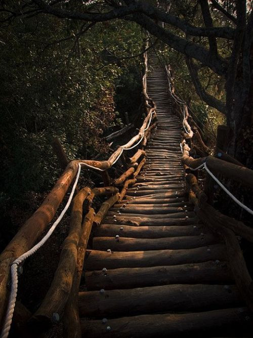 .: Forests, Stairs, Taiwan, Wood Step, Mystic Places, The Bridges, Pathways, Meditation Paths, Stairways