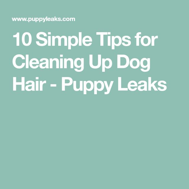 10 Simple Tips for Cleaning Up Dog Hair - Puppy Leaks