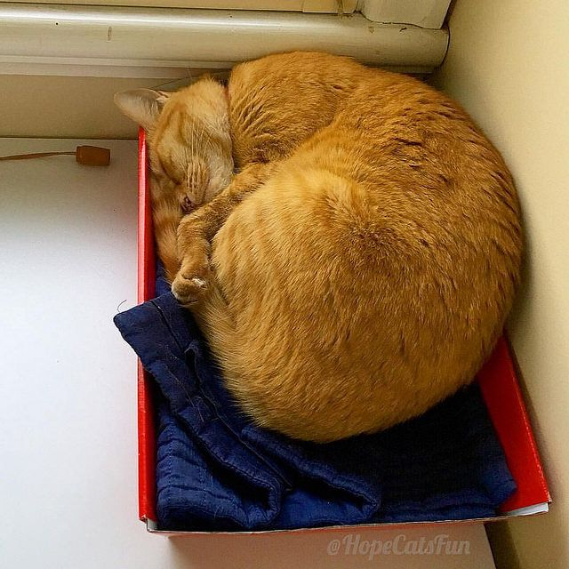 For Autumn any box will do @hopecatsfun Cute ginger cat fast asleep
