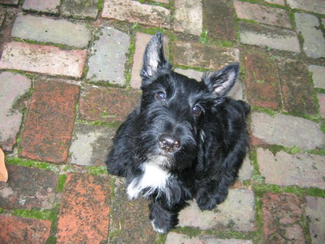 It's National Puppy Day. And it's still Scottish Terrier Month. That can only mean one thing. Time for some puppy pictures! I sure was a cute wee lad. HUG A PUPPY TODAY! And remember, being a puppy...