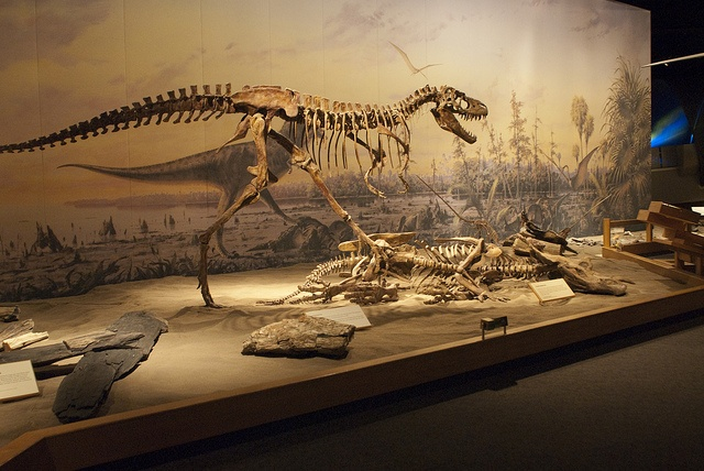Royal Tyrrell Museum of Paleontology