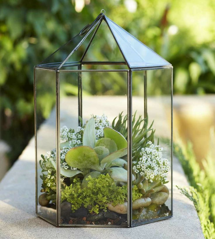 181 best cloches domes and terrariums images on pinterest for Garden cloche designs