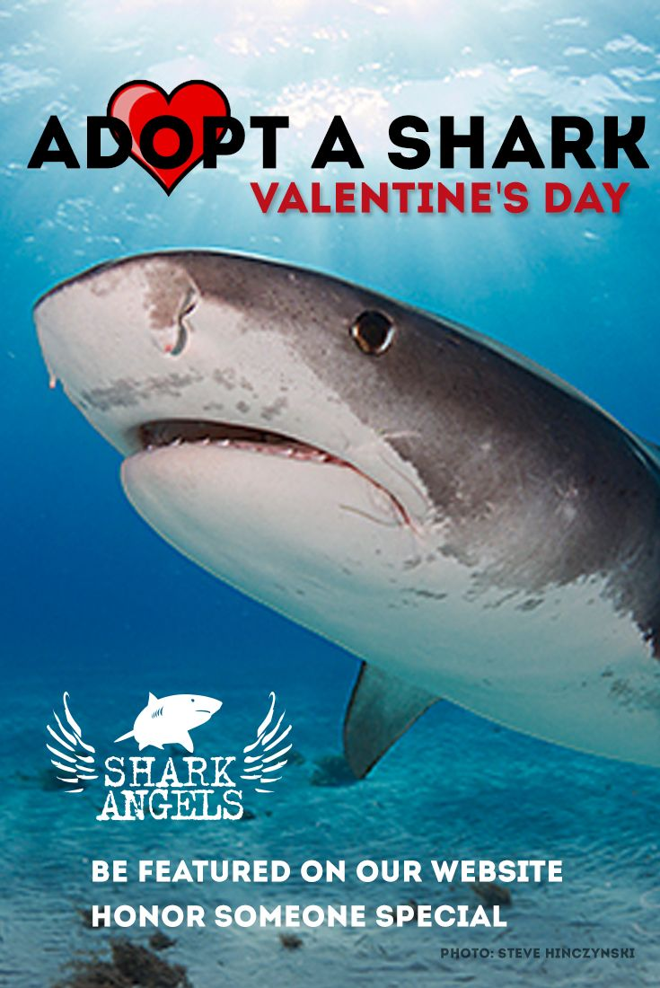 You can adopt a shark as a special gift for Valentine's Day. We include personalized gift cards. Be featured on our website and name your shark.
