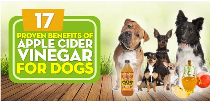 Apple Cider Vinegar For Dogs: 14 Things You're Afraid to ...