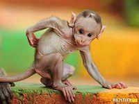 детеныши животных: 57 тыс изображений найдено в Яндекс.Картинках