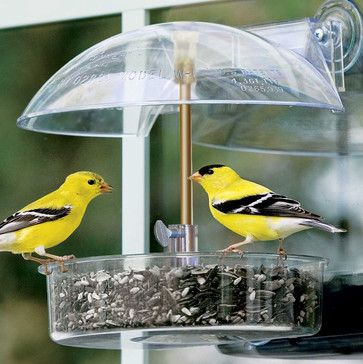 Winner Window Bird Feeder - contemporary - bird feeders - Brookstone
