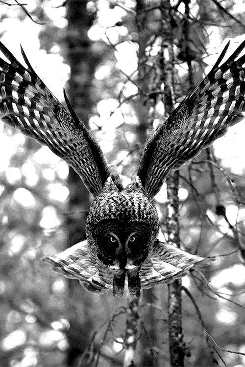 Owl..Tyler Durden
