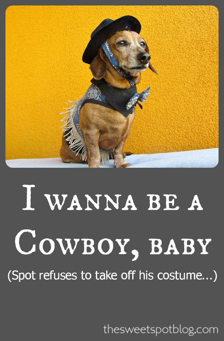 Halloween costumes for dogs by The Sweet Spot Blog http://thesweetspotblog.com/dog-costume-fashion-show/ #dachshund #cowboy
