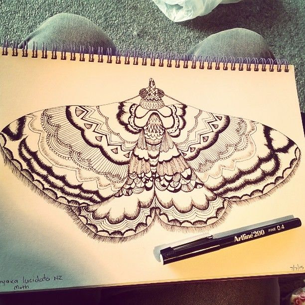 Still drawing  another #nzmoth that's #destinedtobefabric! #pendrawing #moth #sketch #smuk #drawing #artline200 #patterns