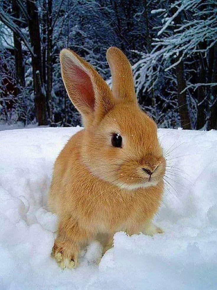 таком варианте фото заяц зайчата зимой представляют