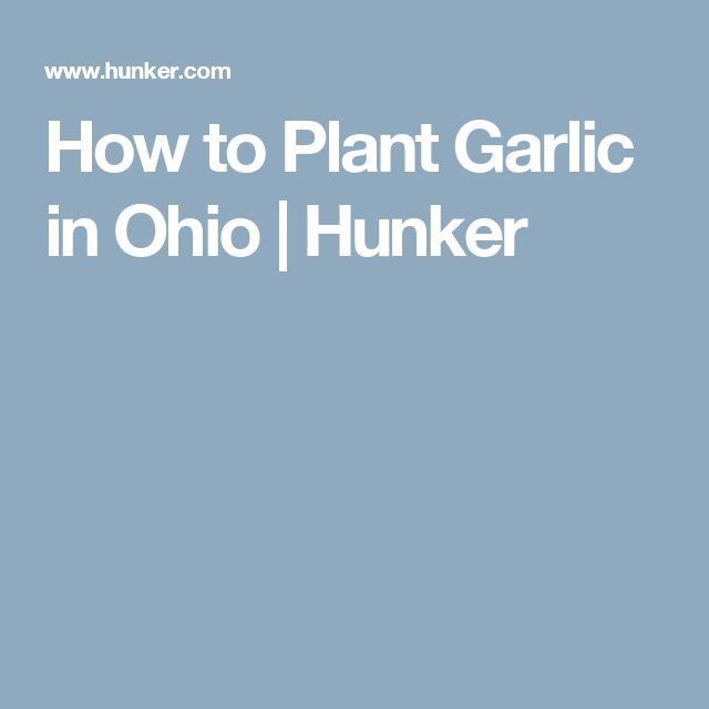 How to Plant Garlic in Ohio | Hunker