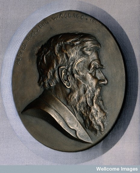Alfred Russell Wallace Medallion, by Albert Bruce Joy, Wellcome Collection.