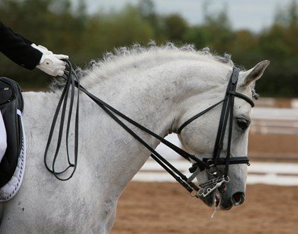 Course Descriptions | Langley Equine Studies